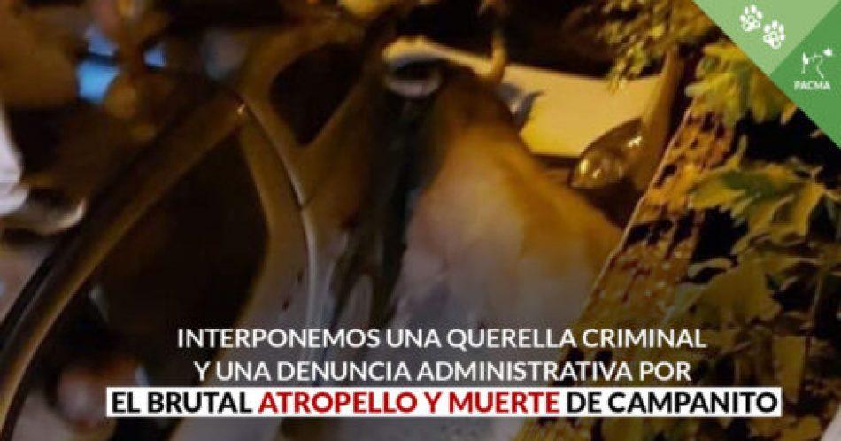 PACMA denuncia por la vía administrativa a la organización del concurso de recortes en Brihuega (Guadalajara) que acabó con un toro atropellado y ejecutado en plena calle