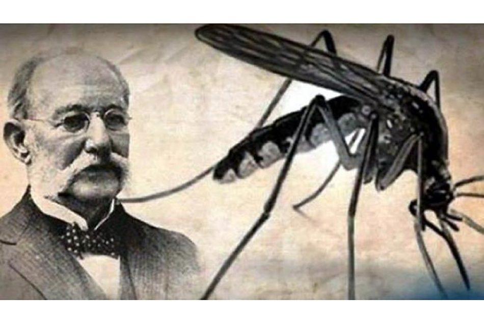 Hipótesis sobre insecto transmisor de fiebe amarilla cumple 140 años
