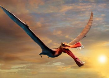 Descubren los restos de un 'temible dragón' en Australia