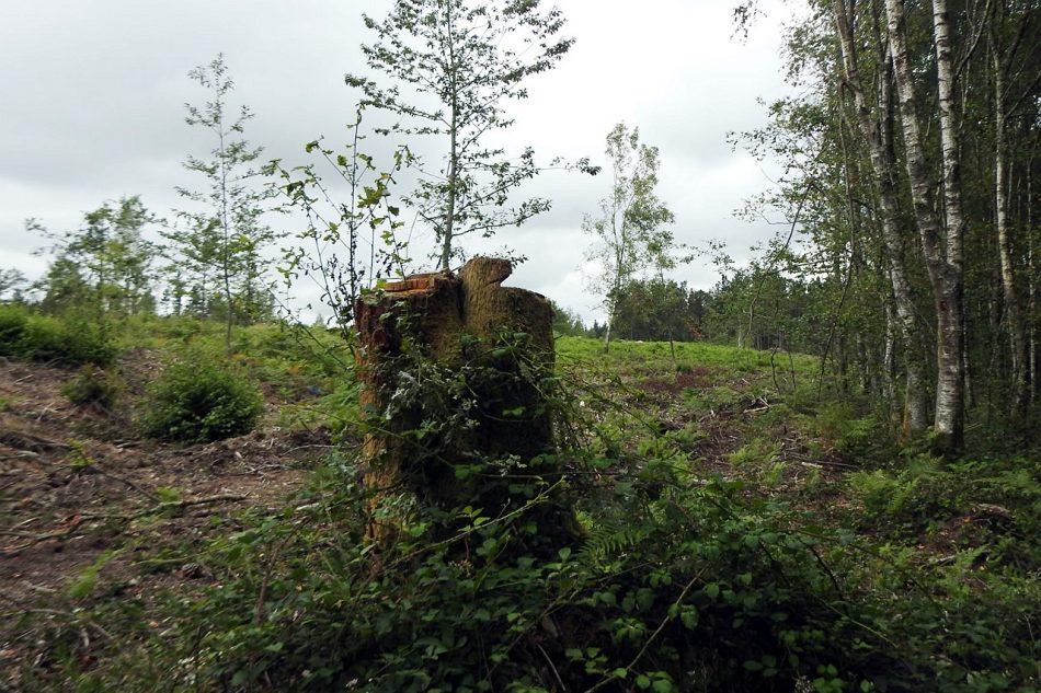 Denuncian as consecuencias da moratoria trampa do eucalipto nas brañas de Baxoi