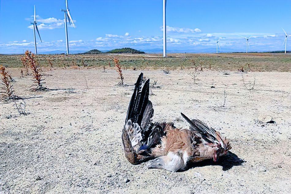 Los parques eólicos de última generación suponen una seria amenaza para la conservación de la biodiversidad