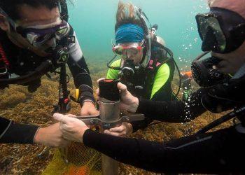 La actividad humana podría asfixiar a los arrecifes del Caribe