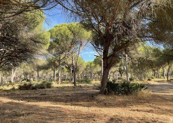 Ecologistas en Acción felicita al Ayuntamiento de Conil por proteger 1.450.000 m2 de suelos urbanizables
