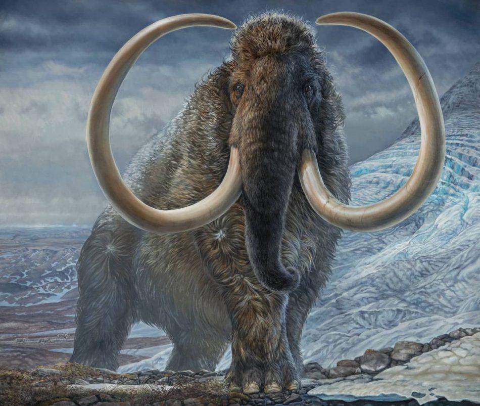 Revelan los patrones de movimiento de un mamut lanudo del Ártico