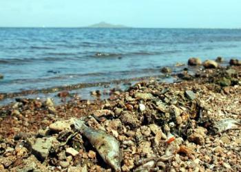 Ecologistas en Acción exige a los gobiernos regional y central que trabajen conjuntamente para solucionar de raíz la eutrofización del Mar Menor