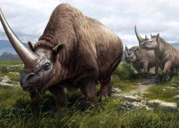 Trazan el árbol genealógico de los rinocerontes