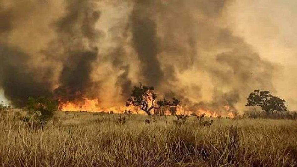 Incendio consume gran parte de una reserva forestal en Brasil
