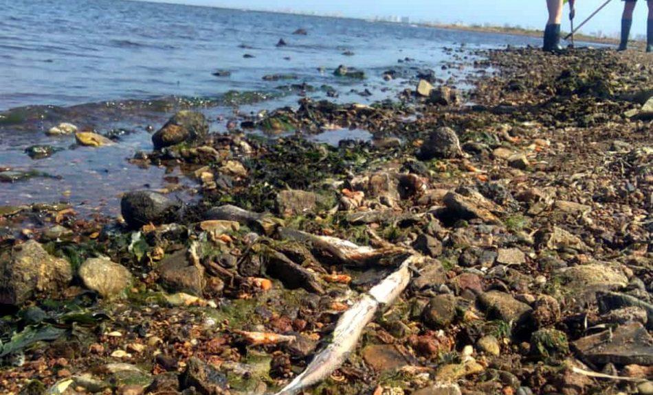 Ecologistas en Acción: «El Mar Menor está en peligro de desaparición»