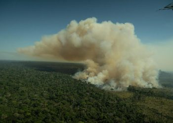 Los satélites confirman que la deforestación en la Amazonia sigue fuera de control