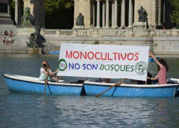 Amigos de la Tierra y Fridays for Future navegan para denunciar los monocultivos de árboles