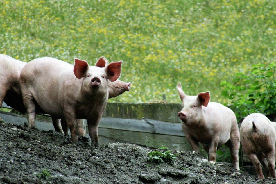 La producción de alimentos genera un tercio de las emisiones globales de gases de efecto invernadero