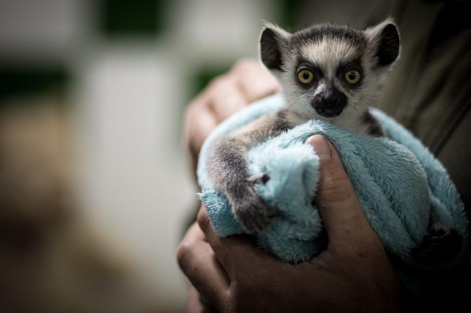 InfoZOOS pide que cesen las interacciones directas entre animales salvajes y público visitante en los zoos españoles