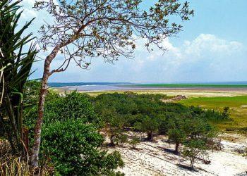 Brasil pierde más de 4.600 kilómetros cuadrados de bosques amazónicos en un año