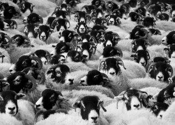 El nuevo 'Atlas de la carne' revela el impacto devastador de la ganadería industrial