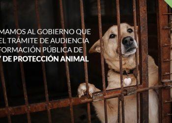 PACMA insta al Gobierno a publicar el Anteproyecto de la Ley de Protección Animal y abrir el trámite de audiencia e información pública