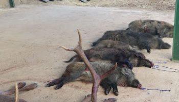 ONGs Ambientales critican subvención para llevar la caza a colegios extremeños