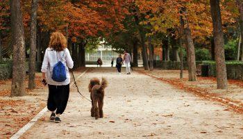 Las personas de barrios más humildes de Madrid realizan menos actividad física en los parques