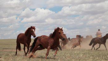 Los caballos modernos se domesticaron en las estepas al norte del Cáucaso y se extendieron por Asia y Europa