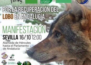 Alianza Verde participa este sábado en la manifestación por la recuperación del lobo en Andalucía