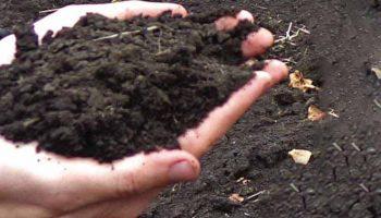 Aprueban en Cuba novedosa legislación sobre suelos y fertilizantes