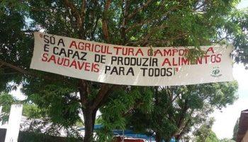 Ministerio Público argentino solicita suspender trigo transgénico
